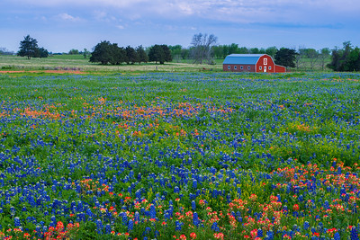 Red Barn and Wildflowers