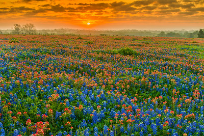 Sunrise Over the Wildflowers