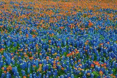 Solid Wildflowers