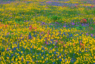 Mixed Wildflowers with Coreopsis