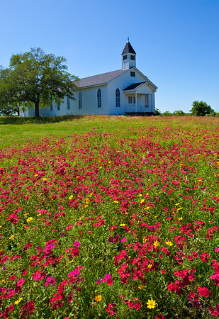 Church and Phlox in the Afternoon