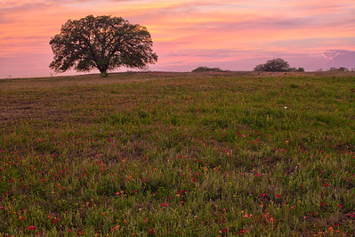 Sunset and Tree in Texas