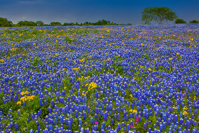 Spring Wildflowers and Approaching Storm