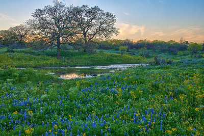 Cow Pond and Flowers