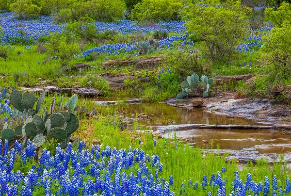 Cactus, Creek, and Bluebonnets