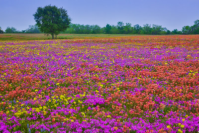 Field of Many Colors