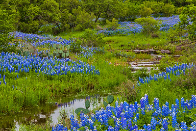 Serene Creek and Bluebonnets