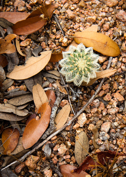 A small cactus with wonderful geometry.