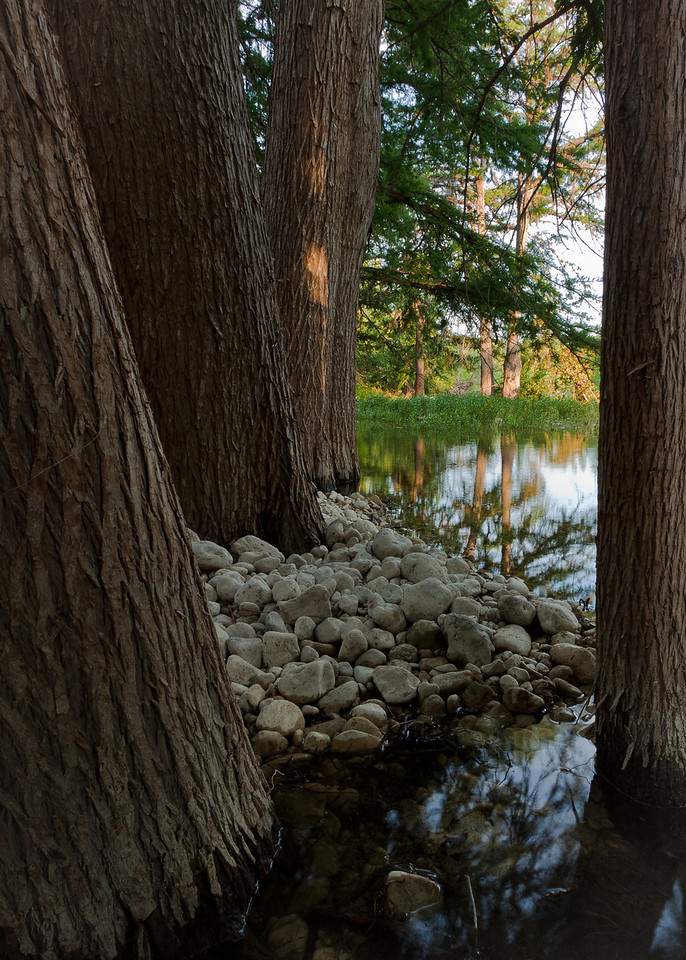 White stones spill between the trees on the Frio River.