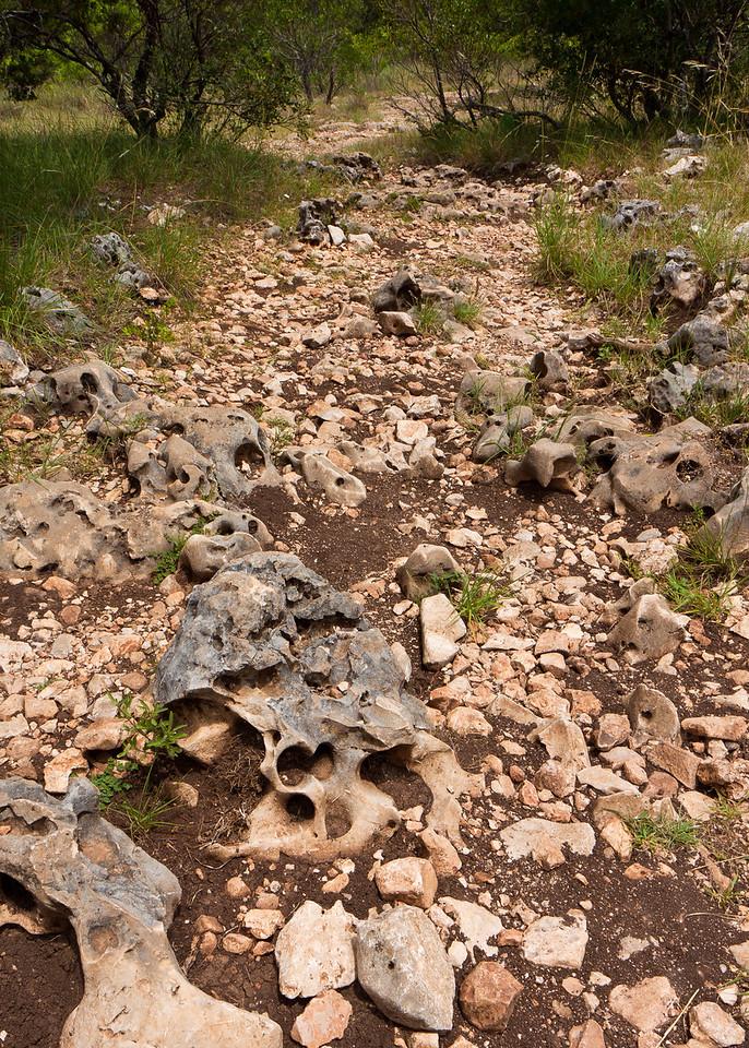 Rocks like the bones of prehistoric monsters litered the trail.