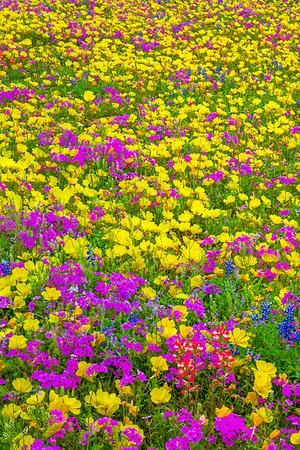 Wildflower Mix Portrait