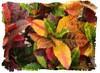 crotons cl - Minneapolis Walker Sculpture Garden [special effects - brush strokes]