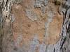 Bark of a tree cl, El Dorado Nature Center, Long Beach, Feb2004