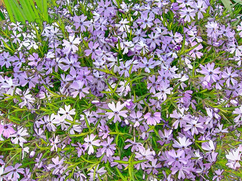 00aFavorite 20140406 (1658) - flowers outside Durham Arts Council, DurhamNC [Topaz Adjust]
