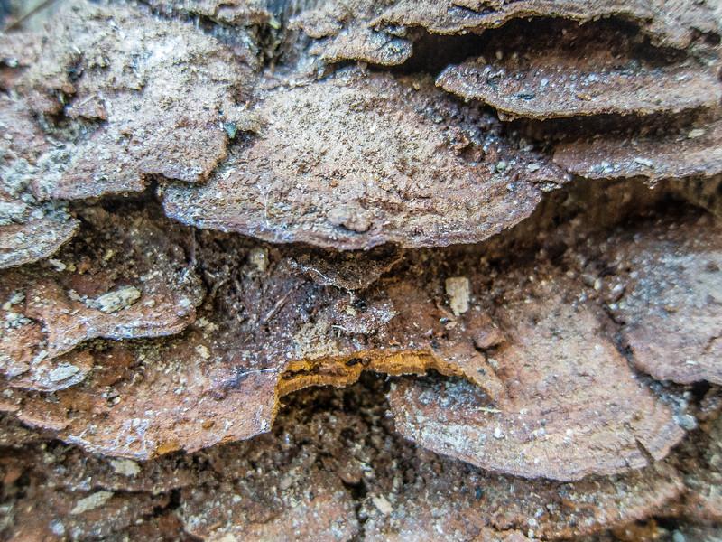 00aFavorite 20131001 (1322) - fungus, The Children's Garden, Durham NC