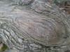 20140501 (1736) - bark, Eno River State Park, Durham NC