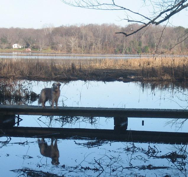 Patuxent Wildlife Refuge