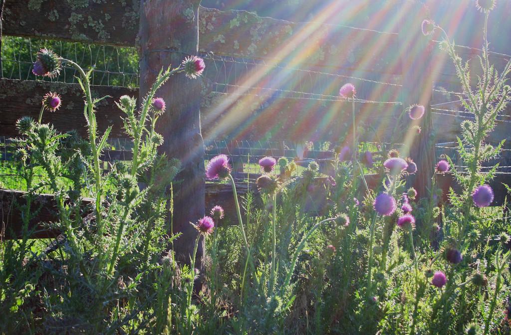 """purple rays"" Cloudcroft, NM"