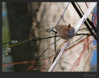 He actually stuck around long enough for me to get another picture ... I think that's a first for a Wren  :-)