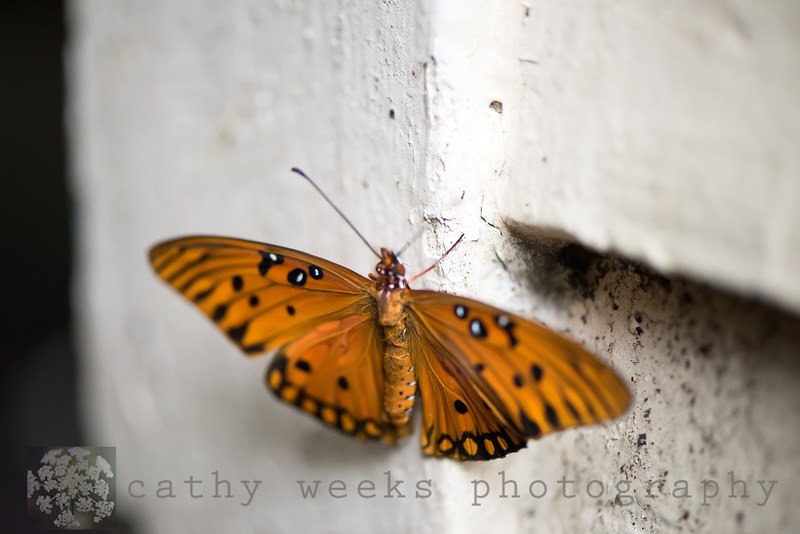 Drying wings...Day 11