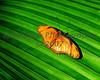Butterflies #6