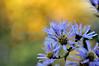 Complimentary colors (Central Park- Sun 11/13/10)