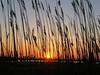 Through the reeds2 (Sat 4 9 05)