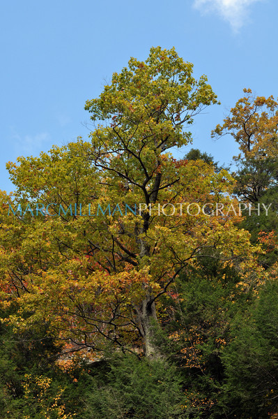Turning yellow (Kaaterskill Falls- Sat 10/23/10)