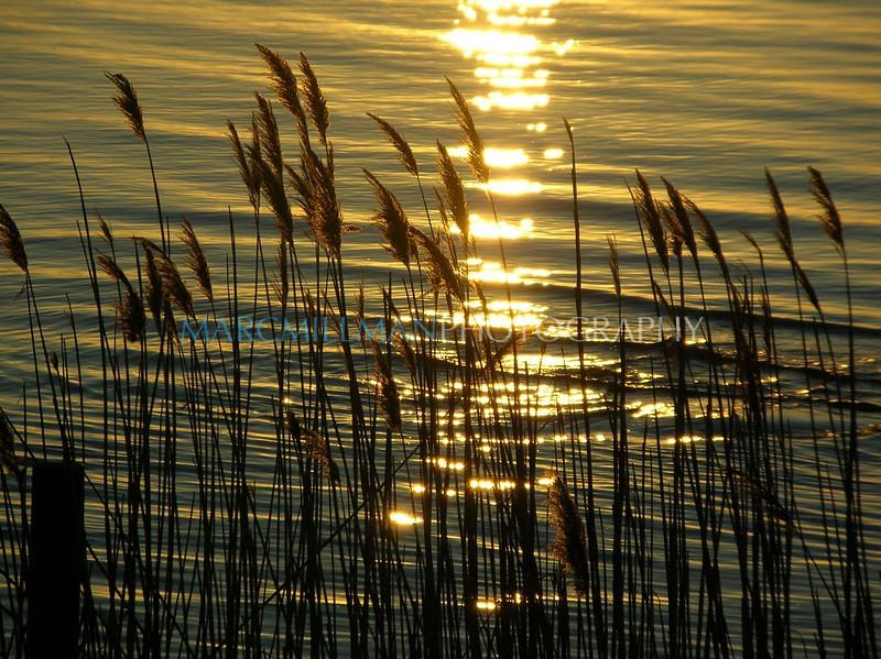 Through the reeds1 (Sat 4 9 05)