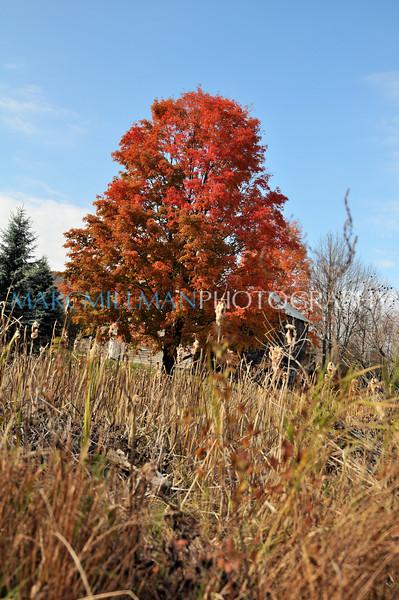 Big Red (Palenville, NY- Sat 10/23/10)
