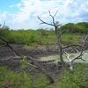 Dead Tree, No Water