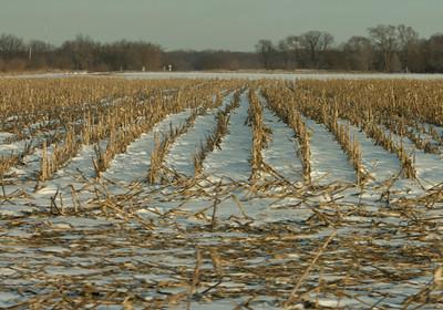 winter is dreary in Iowa, but beauty is found in contrast