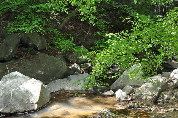 The Fern Creek Habitat at UUCA