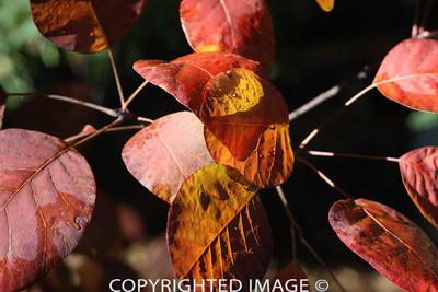 Brilliant Leaves4
