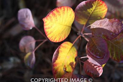 Brilliant Leaves3