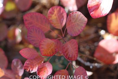 Brilliant Leaves2