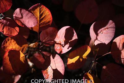 Brilliant Leaves5