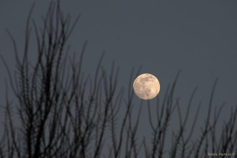 Evening Moon 2