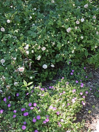 The Garden in 2006 - the Long Borders and the Secret Garden