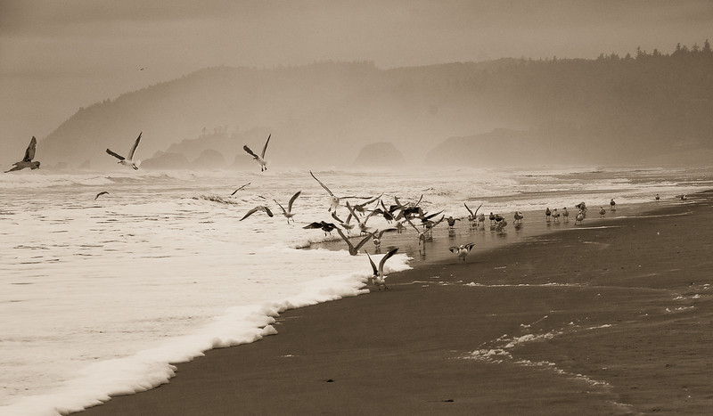 Cannon Beach Seagulls