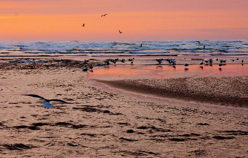 Netarts Bay
