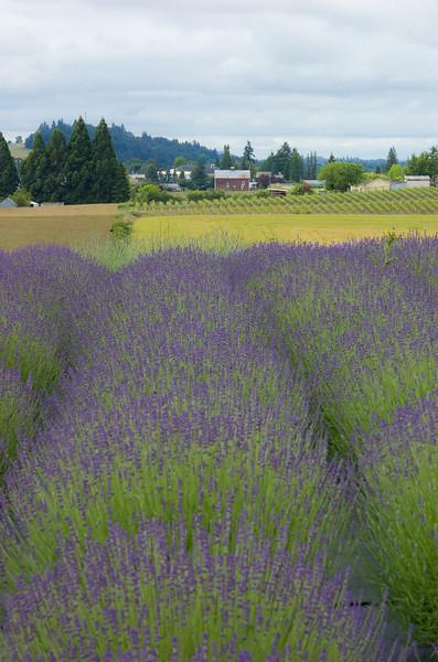 Willakenzie Lavender Farm