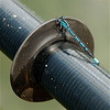 Damselfly on kayak oar.