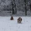 Layla and Josi plowing through the snow.