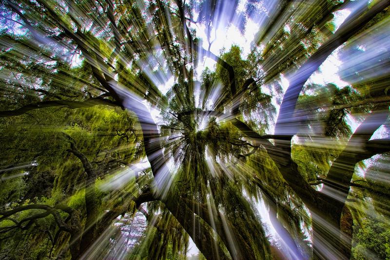 TreeShine