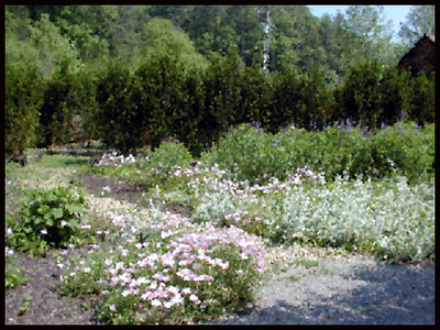 The walking paths through the grounds at The Lily Barn reminded me of an impressionist painting.<br /> Townsend, TN