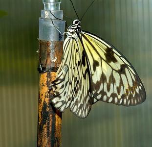 Magic Wings_DSC7795_p1