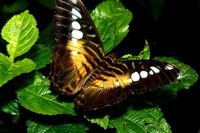 Magic Wings_DSC7793_p1