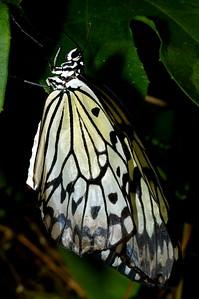 Magic Wings_DSC7810_p1