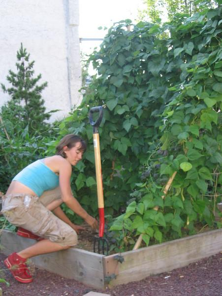 Annie working in Maze Garden... 3-sided bean frame helps shade lettuce for summer plantings.